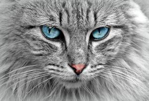 Os olhos estão no olhar.