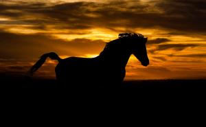 cavalo negro